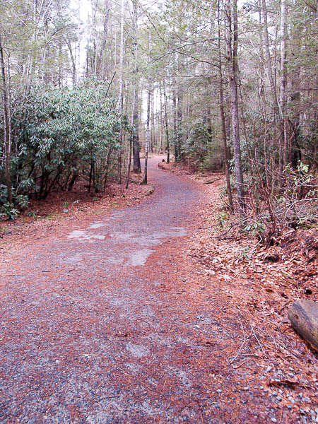 Hiking Trail in Pisgah Forest.